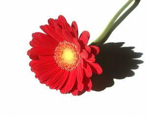 flower 1404120 1