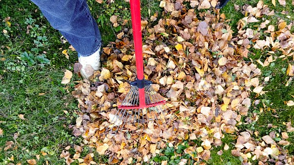 Raking, Fall, Autumn, Rake, Leaf, Garden