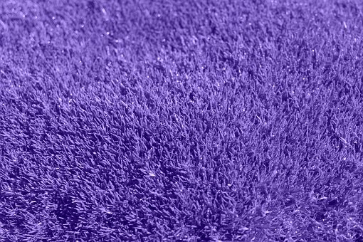 Background, Purple, Grass, Lilac, Carpet
