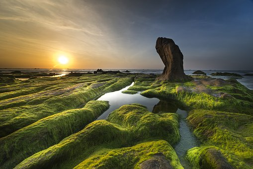 Coast, Algae, Sea, Beach, Shore