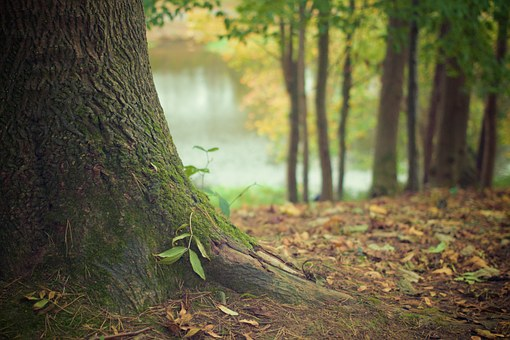 tree trunk 569275 340 1