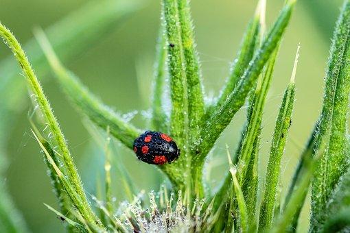 ladybug 3457342 340