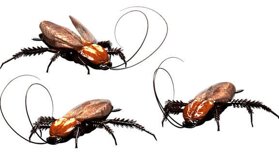 cockroach 3346121 340