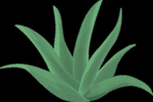 Aloe Vera, Plant, Green, Aloe, Vera