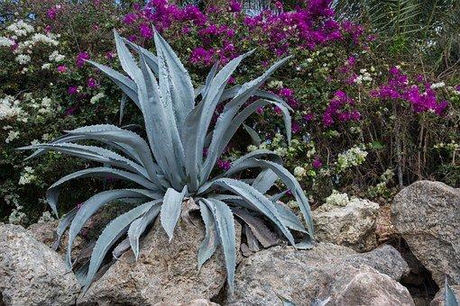 succulent 498507 340