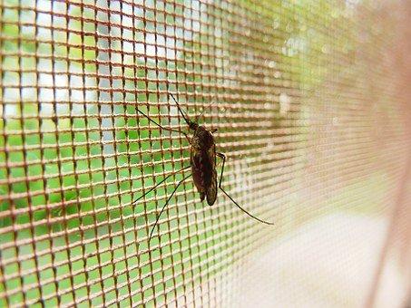 mosquito 19487 340