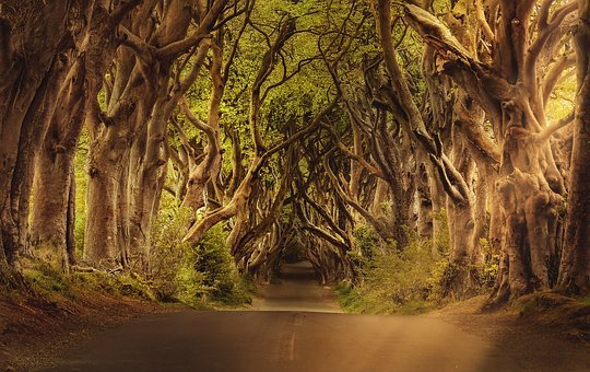 Avenue, Trees, The Dark Hedges, Ireland