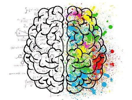 brain 2062057 340