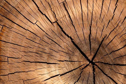 Lumber, Log, Wood, Tree, Cross Section