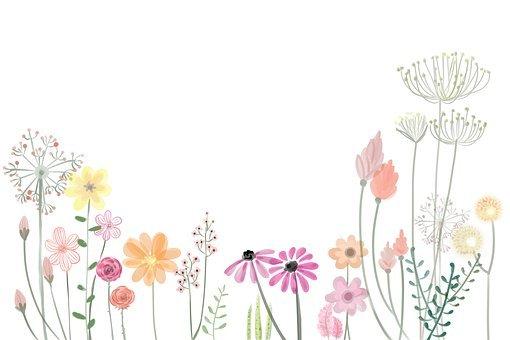 flower 2336287 340