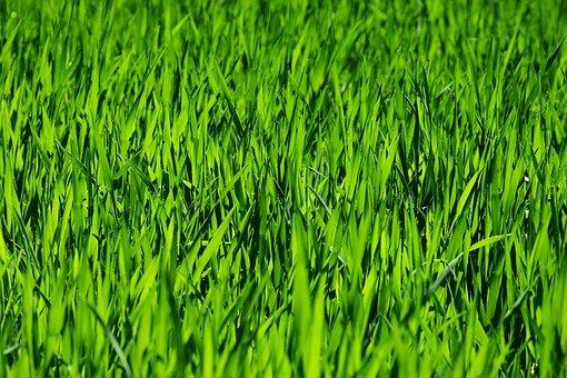 grass 3336700 340